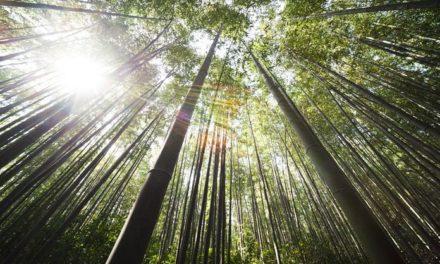 Biti poput bambusa – Moćne lekcije majstora s Istoka