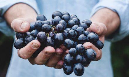 Hrana nije namijenjena da njome samo napunimo želudac: Ona nam daje kvalitetu misli!