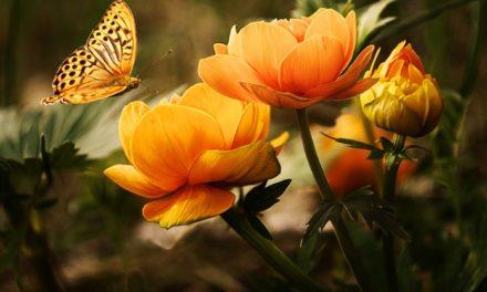 06.04. Poruka dana – Sve je prožeto nevidljivom Inteligencijom
