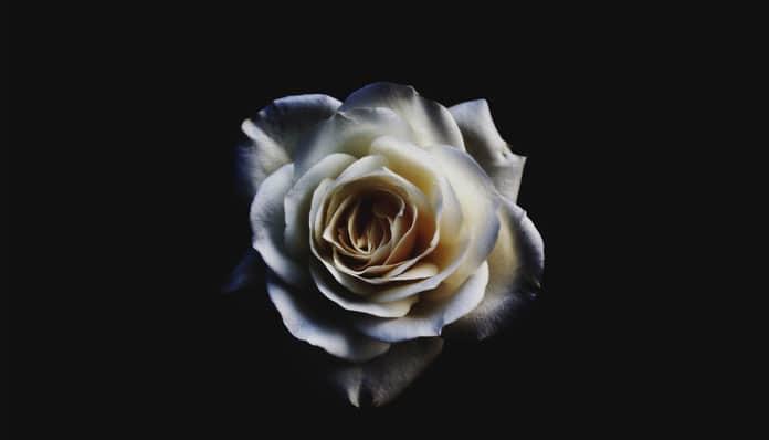 26.12.2019. Poruka Dana – Dobar čovjek vidi dobrotu u svakome, a loš u svemu vidi zlo