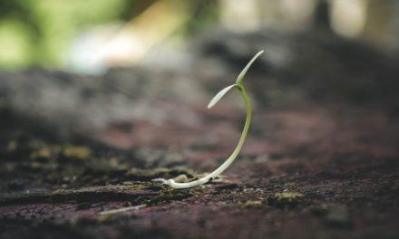 26.06. Poruka Dana – Rast zna biti sve samo ne ugodan