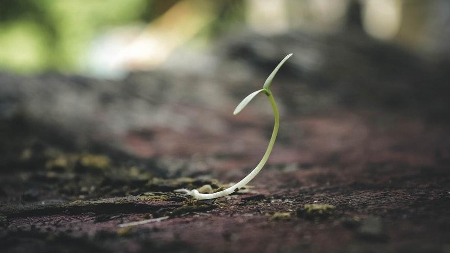 19.04.2020. Poruka Dana – Rast zna biti sve samo ne ugodan