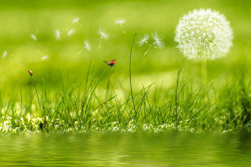 21.01.2020. Poruka Dana – Ništa nije nemoguće, čuda su svugdje oko nas