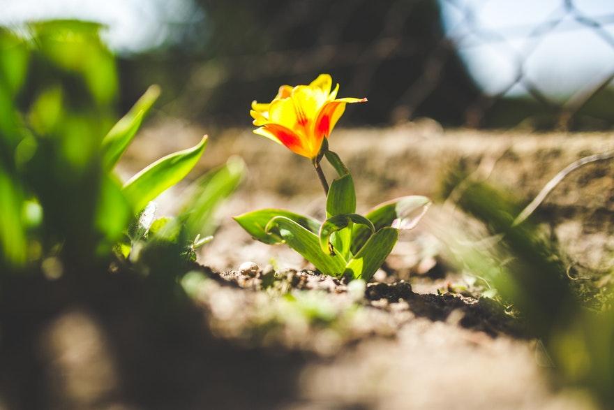 05.04.2019. Poruka Dana – Život ti daje ono što ti je potrebno da naučiš i napreduješ