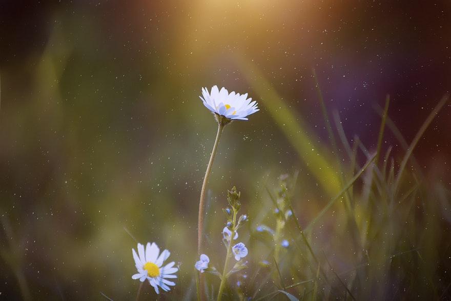 05.05.2019. Poruka Dana – Svaka patnja je prilika za rast