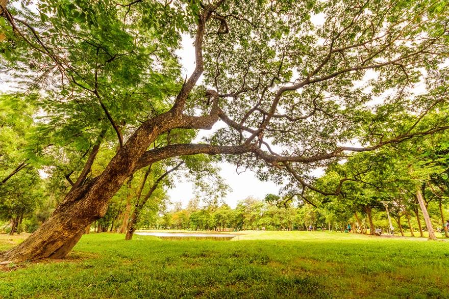 17.07.2019. Poruka Dana – Pretvori ljude u drveće
